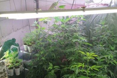 44-Marihuanapflanzen wurden in einer Wohnung in Lengenfeld gefunden.