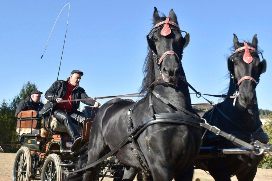 Hindernisrennen mit Pferdekutschen erfordert viel Geschicklichkeit