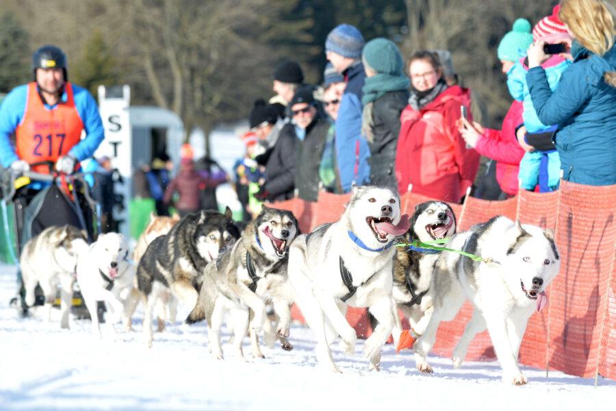 Schlittenhunderennen mit Rekordbeteiligung