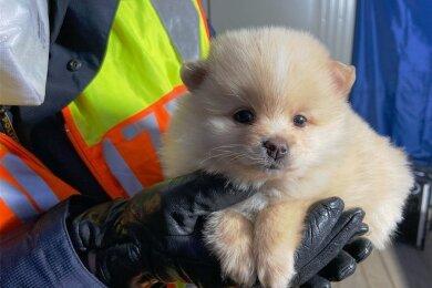 Dieser Hundewelpe war im Auto versteckt.