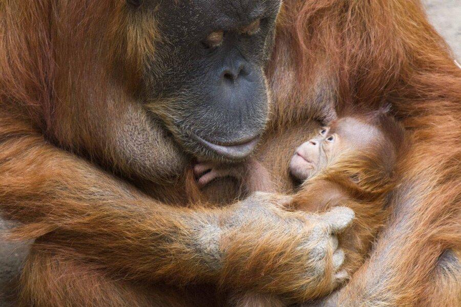 Nachwuchs im Zoo Leipzig
