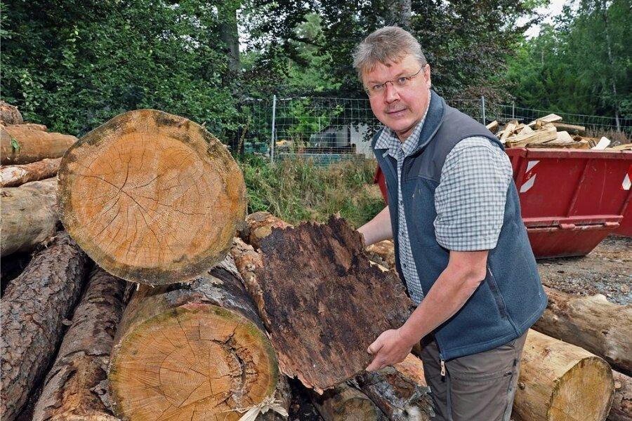 Rund 350 Festmeter Holz von Kiefern und Fichten muss Stadtförster Reiner Freudenberg schlagen lassen, weil sie zu sehr geschädigt sind. Dabei hilft das kühle Wetter den Bäumen schon, mehr Widerstand zu leisten.