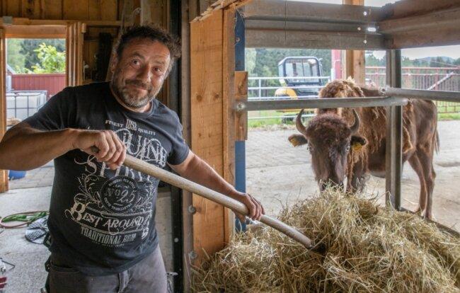 Ronny Werner hält seit Kurzem Bisons bei Schwarzbach - ein Hobby. Er will eine Zucht aufbauen. Das Heu für seine Tiere stammt von den eigenen Wiesen.