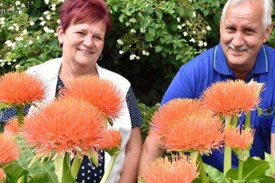 Ute und Ullrich Knoll in Adorf sind stolz auf ihre Garten-Exoten: Blutblumen aus Südafrika.