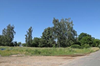 Auf dieser Fläche sollen Eigenheime gebaut werden.