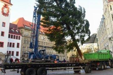 Der Chemnitzer Weihnachtsbaum stammt in diesem Jahr aus dem Erzgebirge.