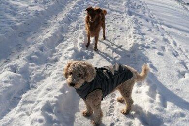Zuckersüß und bei Alt und Jung beliebt. Sunny (vorn) und Barclay haben an der Schwarzen Katz etwas gefressen, das kein Tier fressen sollte. Glücklicherweise ging's gleich im Anschluss zum Tierarzt.