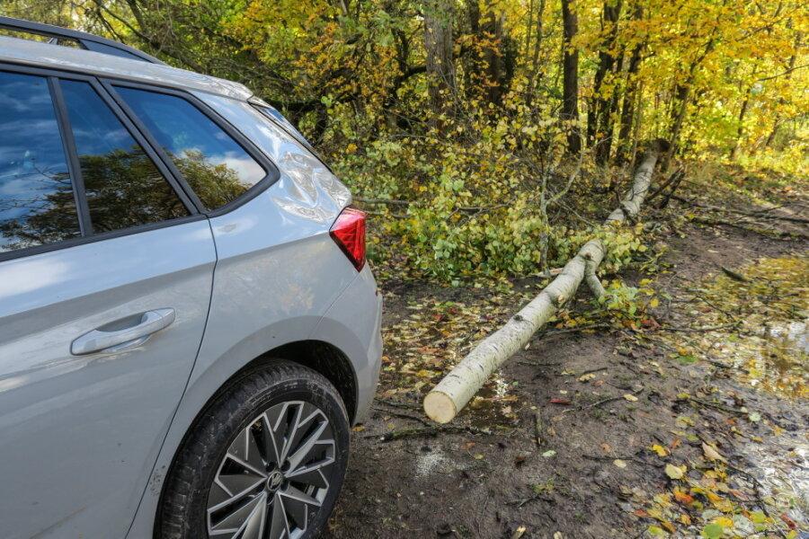 Beim Einsteigen in einen Skoda wurde ein Mann in Bad Schlema von einem Baum getroffen.