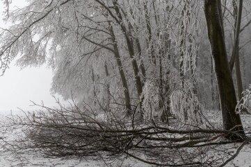 Die Schneelast war für diese Bäume zwischen Arras und Holzhausen erdrückend. Bäume stürzten um und Äste brachen ab.