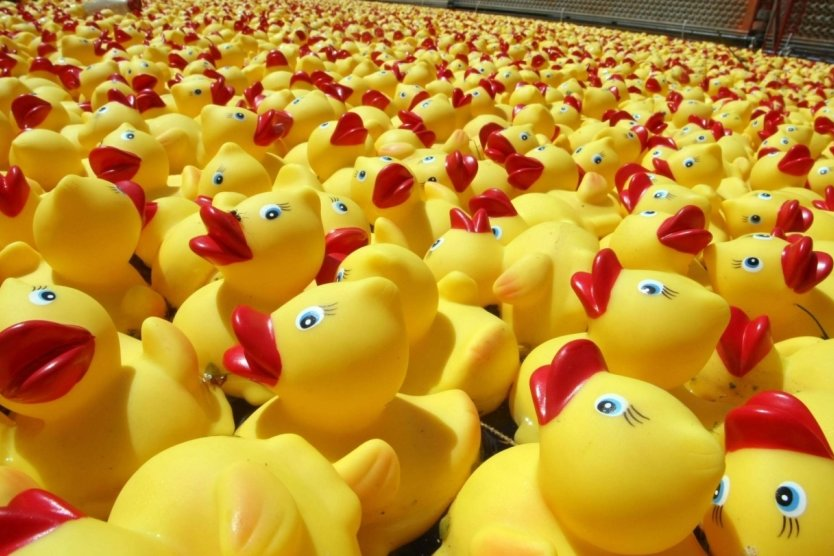 Die Gummi-Enten sollen am 6. Juni in der Zschopau in Flöha um die Wette schwimmen. Allerdings werden es Genossenschafts-Enten sein und sie werden deshalb orangefarben aussehen.