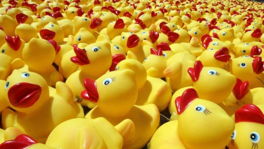Zwickauer Entenrennen soll regionale Projekte unterstützen