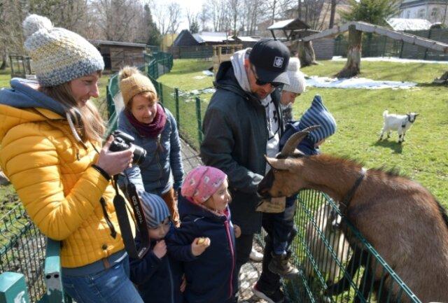 Besuch der Großfamilie Dittrich/Irmscher/Güldner aus dem Landkreis Sächsische Schweiz-Osterzgebirge im Tierpark Freiberg. Im Bild Maria Irmscher, die sich Ziege Liesbeth als Fotomotiv auserwählt hat.