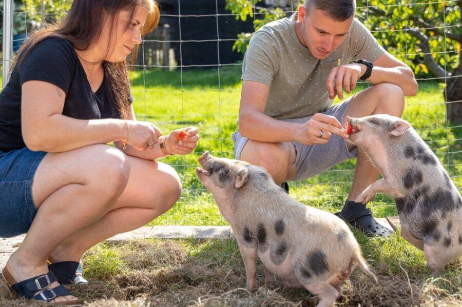Melanie und Florian Butz haben längst das Vertrauen der kleinen Hängebauchschweine errungen - nur hochnehmen lassen sich die Ferkel nicht.