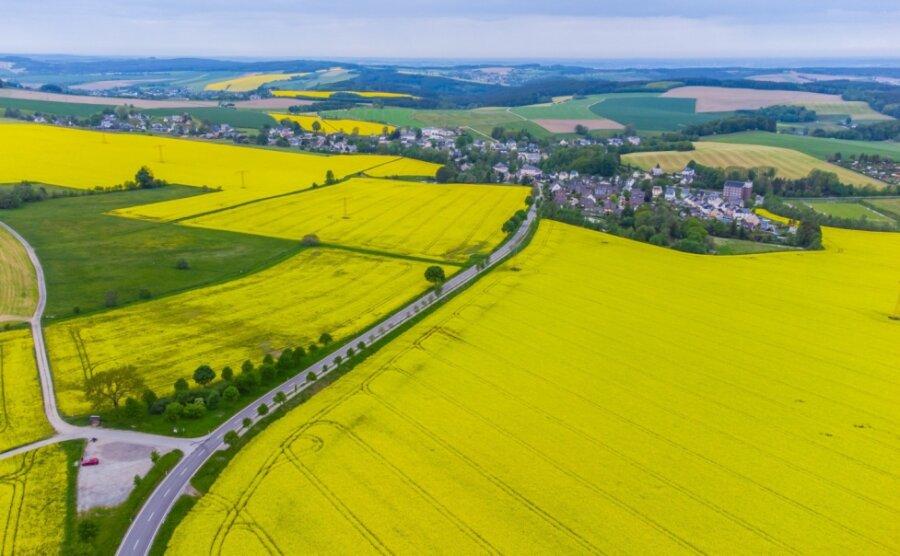 Die Rapsfelder strahlen Gelb.