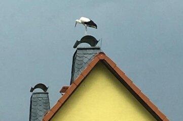 Ein Storch auf einem Haus in Hainichen.