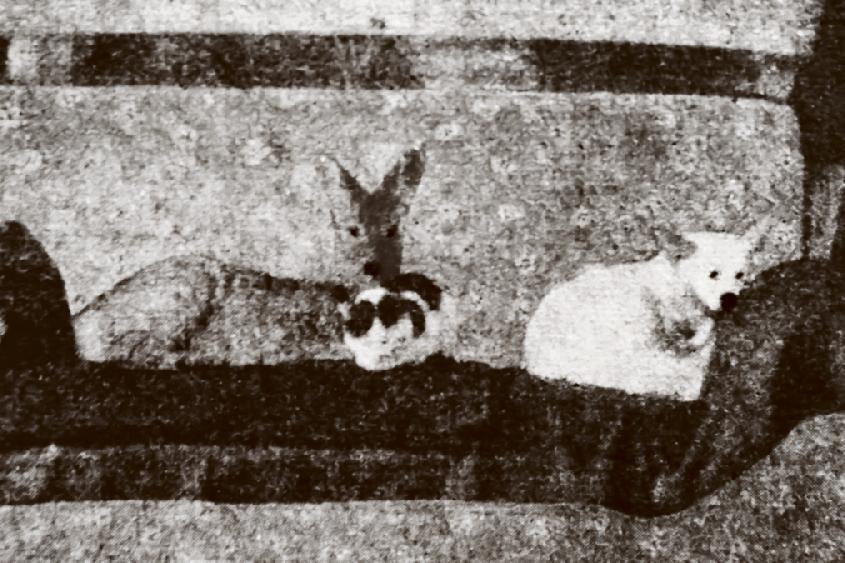 """Das Reh mit Hund und Katz auf dem Sofa: Diese Foto dieser tierischen Freundschaft erschien im """"Kulturboten für den Musikwinkel"""" 1960 gemeinsam mit dem Gedicht """"Die vertrong sich""""."""