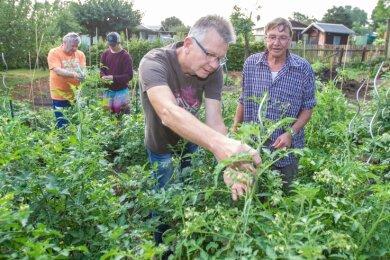 Gerd Steffen, Geschäftsführer des Regionalverbandes Vogtländischer Kleingärtner (vorn li.) und Roland Eichhorn (li.), inspizieren die Pflanzen in den neuen Tafelgärten.