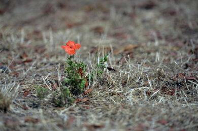 Milde Winter, heiße Sommer: Die Trockenheit der vergangenen zwei Jahre zeigt Auswirkungen auf die Natur. Was das für die tieferen Bodenschichten, den Wald, das Grundwasser und die Wasserqualität in Seen bedeutet, wird an der TU Bergakademie erforscht.