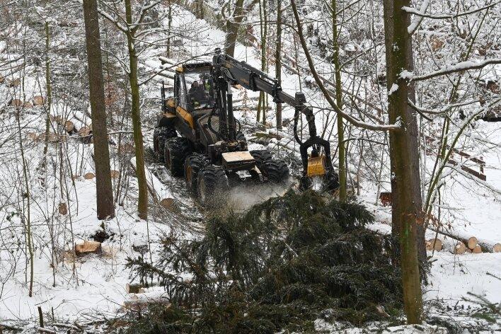 Im Rabensteiner Wald in Grüna werden etwa Tausend Bäume gefällt, um Platz für junge Bäume zu schaffen.