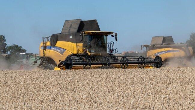 Auf den Feldern in Mittelsachsen, wie hier bei Rochlitz, ist die Weizenernte noch in vollem Gange.