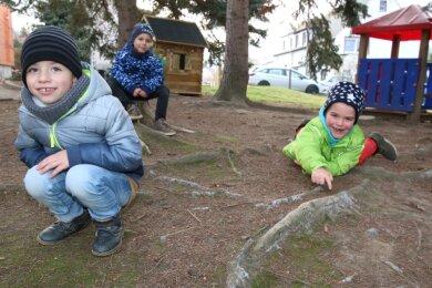 """Timo, Kurt und Benedict (v. l.) zeigen die Wurzeln der Nadelbäume, die zu Stolperfallen geworden sind. Der Außenbereich der Kita """"Burggeister"""" in Kriebethal soll im nächsten Jahr umgestaltet werden."""