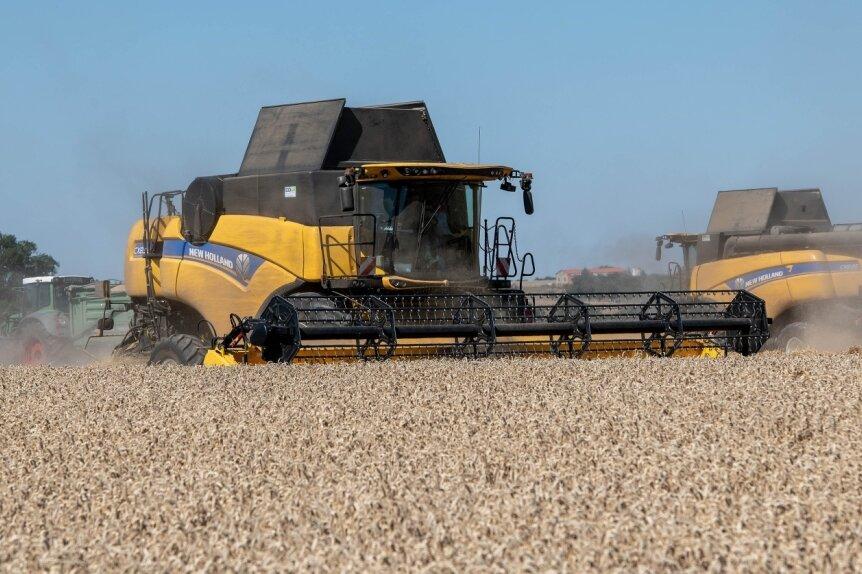 Auf den Feldern in Mittelsachsen, wie hier in der Nähe von Rochlitz, ist die Weizenernte noch in vollem Gange.