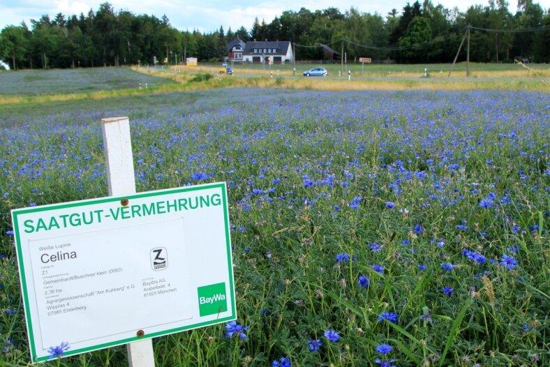 Das Schild klärt auf, was auf dem Feld vorrangig wachsen soll. Die Natur hat es anders bestimmt.