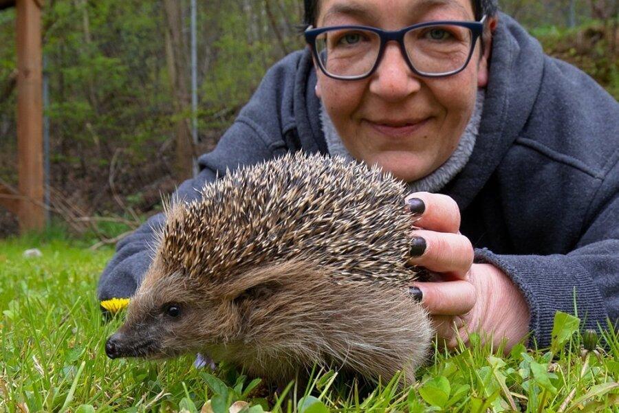 Wird liebevoll auch von Tierheimleiterin Jana Berger umsorgt: Igel Needles.