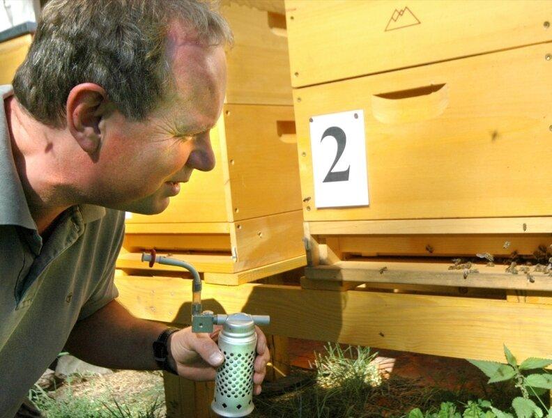 """<p class=""""artikelinhalt"""">Rolf Schallau hat sein Herz für Bienen vor einigen Jahren wiederentdeckt. Der Fünfzigjährige ist nun der """"Spund"""" unter den durchweg betagten Imkern des Altkreises Auerbach. Mit einem so genannten Smoker beruhigt er hier eines der fünf Völker des Umweltzentrums, um den Einflug besser beobachten zu können. </p>"""