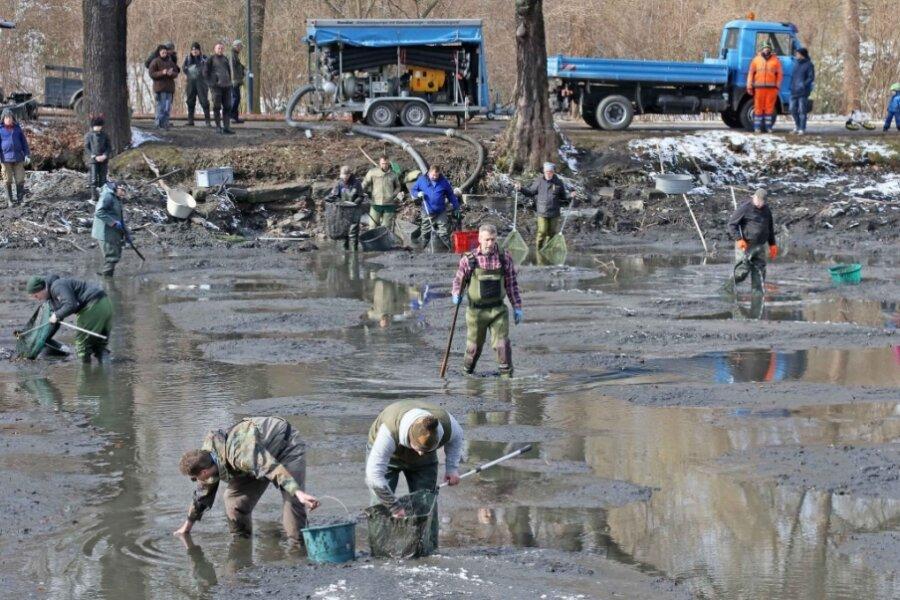 Vorbereitung für Sanierung des Langen Teichs - Fische müssen umziehen