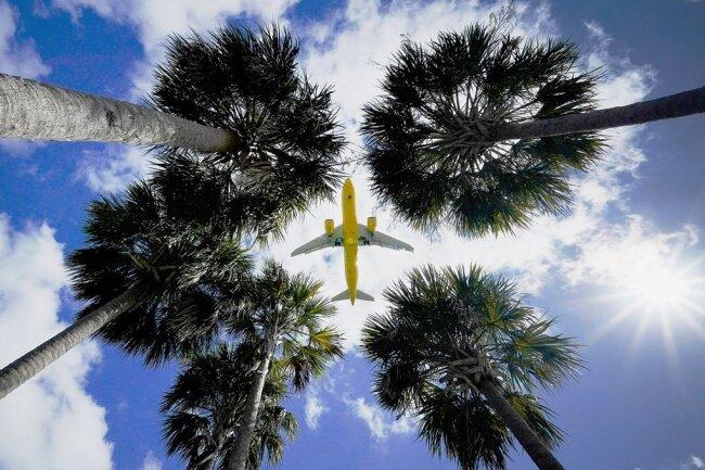Endlich wieder Palmen in südlichen Ländern sehen - das soll bald wieder möglich sein.