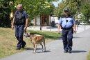 Zu Schwerpunktzeiten wird im Sommer in der Auerbacher Innenstadt verstärkt kontrolliert, unter anderem mit einem Polizeihund.