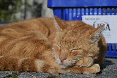 """Die über das Universitätsgelände tigernde """"Campus Cat"""" alias Leon ist ein Maskottchen der Hochschule in Augsburg. Mit einer Petition sollte erreicht werden, dass der Kater Staatsbediensteter wird."""