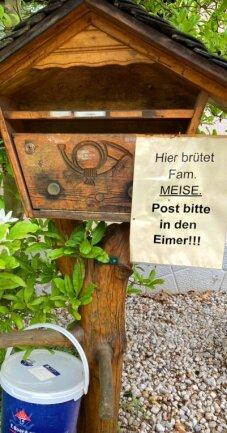 Am Angerbach in Lichtenwalde gibt es einen ganz besonderen Nistkasten: Eine Meisenfamilie hat es sich in einem Briefkasten gemütlich gemacht und brütet dort.