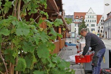 Das Weindorf in Zwickau öffnet am heutigen Freitag seine Tore für Besucher. Sie können ohne Voranmeldung kommen, müssen aber digital oder analog Kontaktdaten hinterlassen.