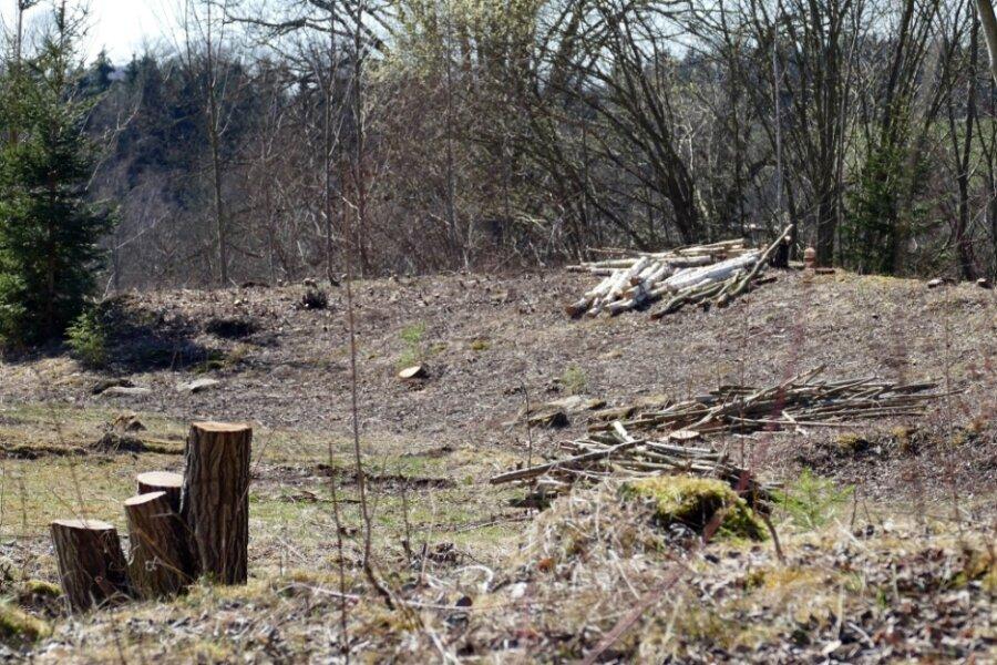 Auf dem Grundstück nahe der Knappschaftsklinik wurden mehrere Bäume gefällt und Büsche entfernt. Naturschützer beklagen die Zerstörung eines Biotops.