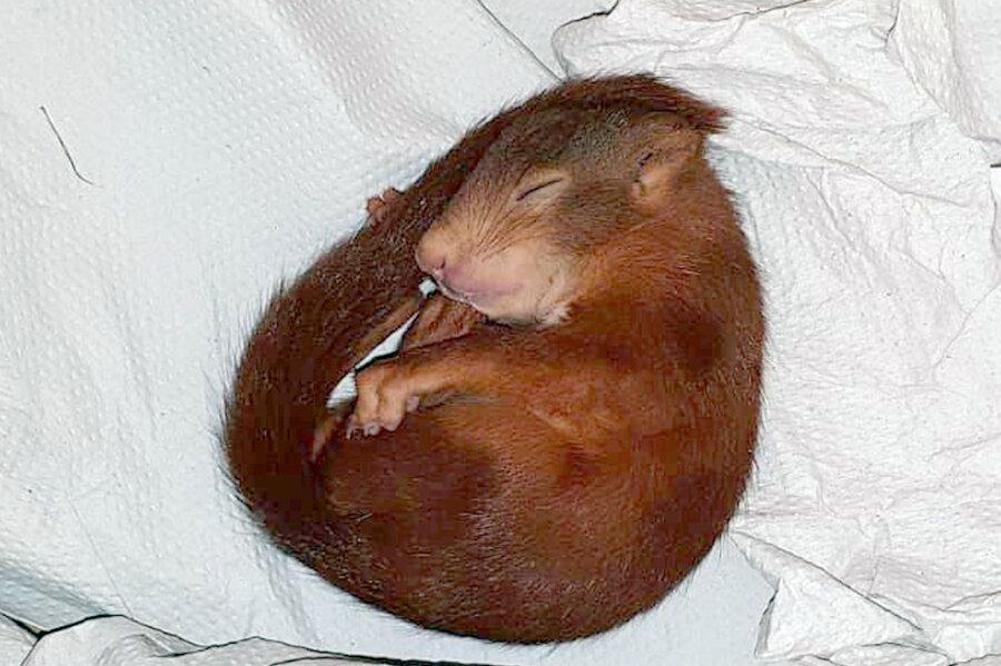 Aufdringliches Eichhörnchen hat noch eine Überraschung parat