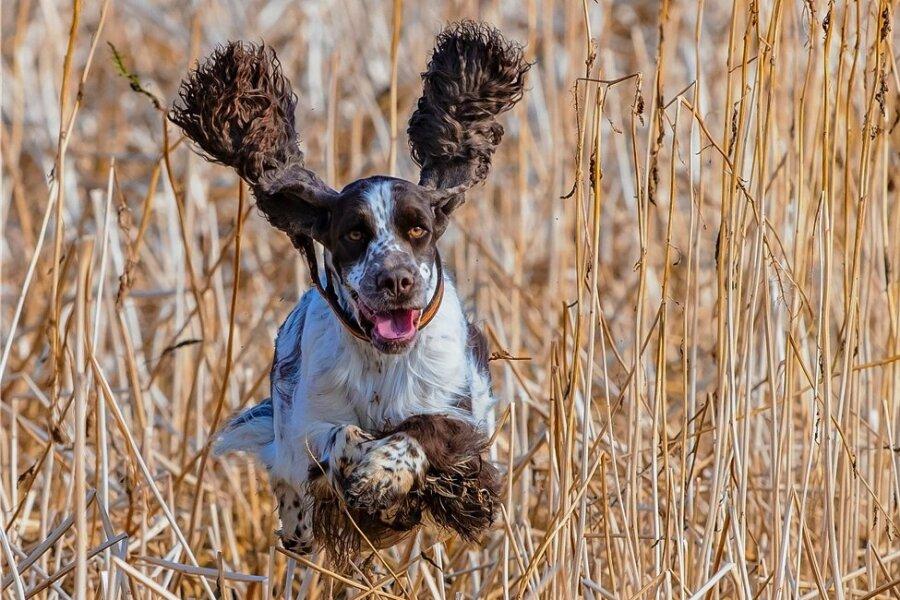 5,6 Millionen Hunde leben in Deutschland. 433.600 davon sind im vergangenen Jahr neu hinzugekommen. Allein im Juni 2020 verzeichnete die Tierschutzorganisation Tasso ein Plus von 25 Prozent im Vergleich zum Vorjahresmonat.
