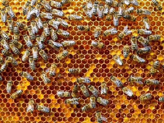 Bienenpest in Bockendorf ausgebrochen