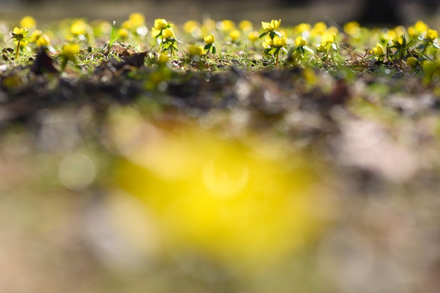Landrat im Vogtland warnt: Corona-Regeln gelten trotz Frühlingswetter