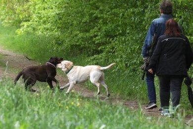 Bei Hundehaltern ist der Pfaffenberg zum Gassigehen beliebt. Künftig gilt auch auf den Zugangswegen Leinenpflicht für Vierbeiner.
