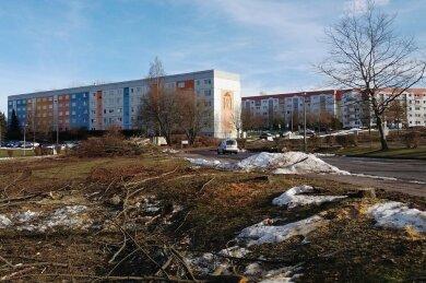 Im Wohngebiet Wasserturm in Limbach-Oberfrohna werden seit einigen Tagen etliche Bäume gefällt. Das ist notwendig, weil auf dem Areal Bauarbeiten bevorstehen.