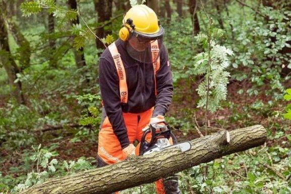 Oberlungwitz verändert Regeln zum Baumfällen