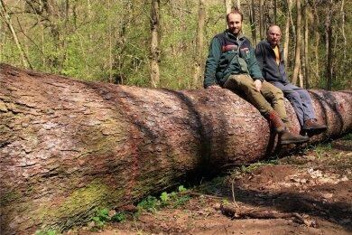 Revierleiter Nick Schubert (links) und Rainer Köhler von der örtlichen Wandergruppe beim Probesitzen auf der umgestürzten Riesenfichte, aus der eine Bank werden soll.
