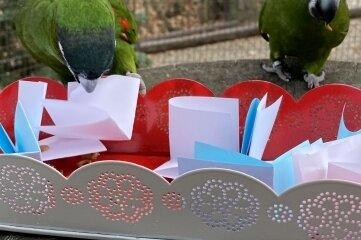 Für die Zwergaras werden Leckereien in gefalteten Zetteln versteckt.