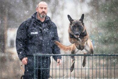 Gelehrig selbst im Schneegestöber: Schäferhund Big springt auf Kommando über einen Zaun. Viele Stunden muss Roy Harzer dafür mit seinem Hund trainieren. Besteht der die Prüfung, darf er mit dem Lehrwart für Diensthundeführer bei der Bundespolizei in Pirna mit auf Streife.