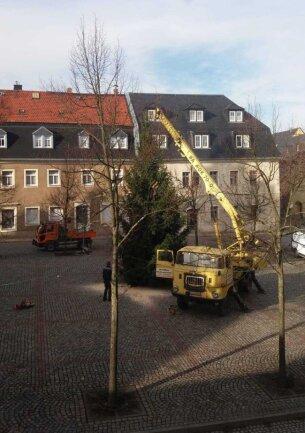 In der Woche vor dem ersten Advent wurde der Baum auf dem Marktplatz aufgestellt.