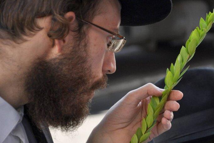 Ein Mann beim Begutachten der Perfektheit eines Zweiges für den Sukkot-Feststrauß in Jerusalem. Sukkot - das Laubhüttenfest - wird sieben Tage lang vom 15. bis 21. Tischri des Jüdischen Kalenders (September/Oktober) gefeiert. Sukkot gilt als das größte Freudenfest des Jüdischen Jahres.
