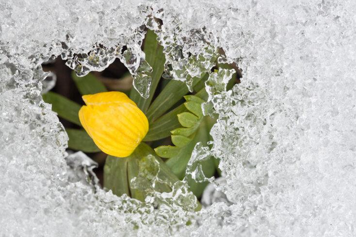 Noch kein Frühling