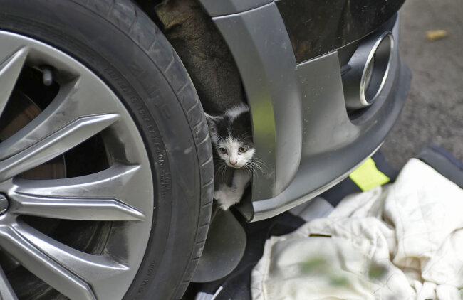 Diese junge Katze befreiten Feuerwehrleute aus dem Motorraum eines Autos.